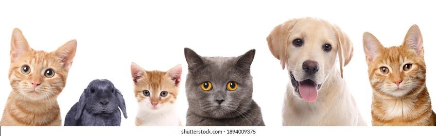 Schöne Katzen, Hunde und Kaninchen vor weißem Hintergrund