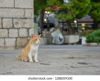 Beautiful cats on the street