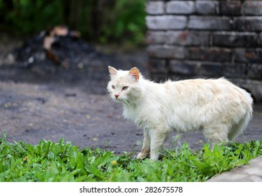 Beautiful cats photographed on the street in summer closeup
