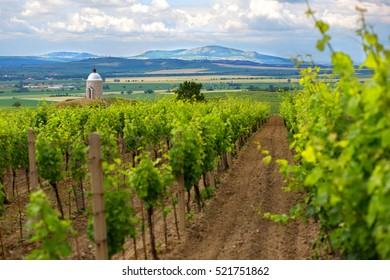 Beautiful chapel in vineyard on south Morava. Nice chapel Zimarky near Velke Bilovice on south east Moravia. Typical view on countryside in Morava region near Mikulov, Breclav, Lednice.