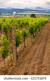 Beautiful chapel in vineyard on south Morava. Nice chapel Zimarky near Velke Bilovice on south east Moravia. Typical view on countryside in Morava region near Mikulov, Breclav, Lednice. - Shutterstock ID 521751874