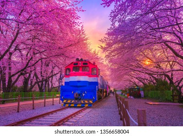 Beautiful cherry blossom festival at Gyeonghwa station at Night.Jinhae,South Korea.