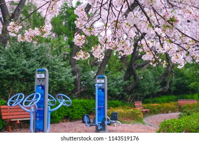 Beautiful Cherry Blossom in Jinhae cherry blossom festival at Jinhae city of South Korea on April 2018.
