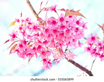 Beautiful cherry blossom tree pink sakura stock photo edit now beautiful cherry blossom pink sakura flower on nature background mightylinksfo