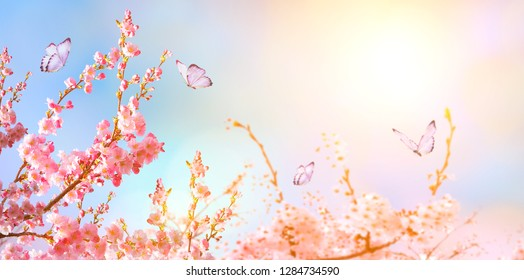 Beautiful cherry blossom sakura with butterfly in spring time over blue sunny sky. Panoramic view. Copy space