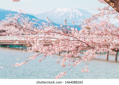 Beautiful cherry blossom or sakura in spring time with blue sky  background in Japan.