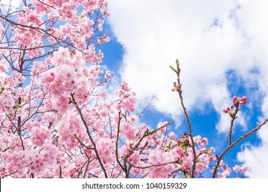 Pink Dragon Flowers Images Stock Photos Vectors Shutterstock