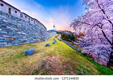 Beautiful cherry blossoms at Namsan Mountain in Seoul,South Korea this image can use for travel,Sakura and Holiday concept