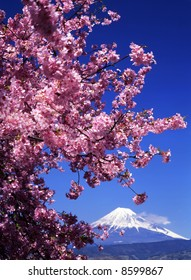Beautiful cherry blossoms with snow-capped Mount Fuji