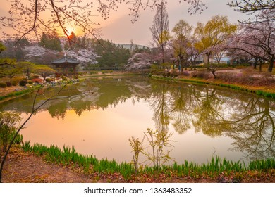 Beautiful cherry blossoms in spring in Gyeongju South Korea.
