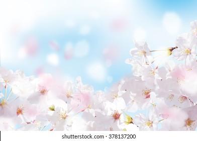 Beautiful cherry landscape - Shutterstock ID 378137200