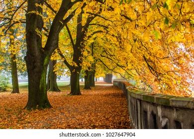 Beautiful chestnut alley in Autumn.