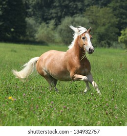 Beautiful chestnut horse with blond mane running in freedom with some trees on the background