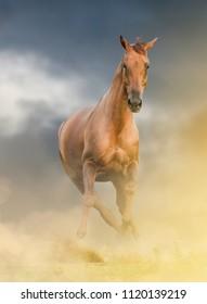 Beautiful chestnut horse on a wild