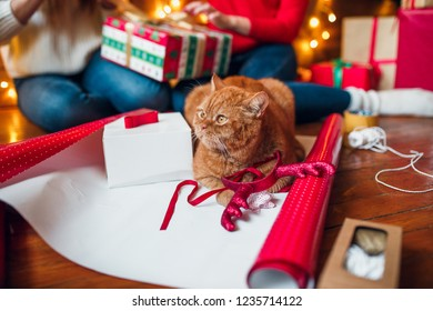 Beautiful Christmas background with a new year decor, old paper and gifts and cat lies on a wooden background. Merry Christmas postcard.