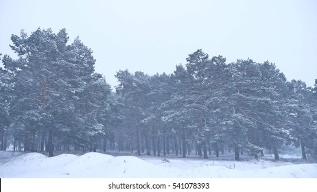 Beautiful christmas blizzard tree in winter landscape in nature late evening in snowfall landscape