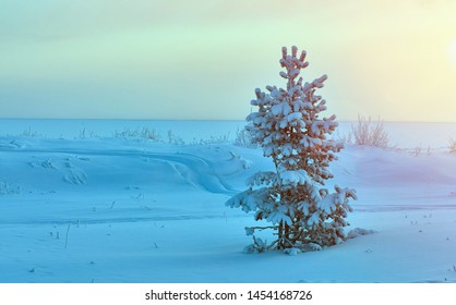 Beautiful Christmas landscape,  winter  pine forest seaside dunes