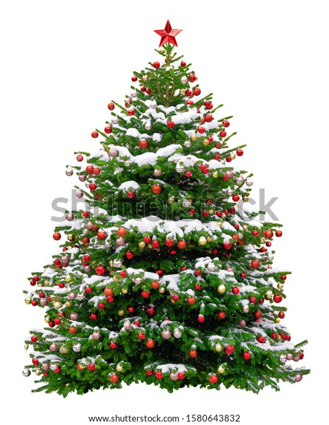 Beautiful Christmas tree decorated with red balls. Snowy Christmas tree wit red star isolated on white background.