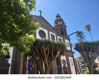 Beautiful church in the old town of San Cristóbal de La Laguna (Cathedral Nuestra Señora de los Remedios). Colonial architecture. UNESCO World Heritage. Olive trees (Tenerife, Canary Islands, Spain)