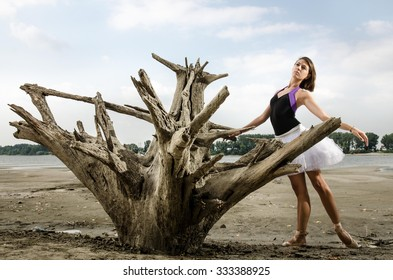 Beautiful classical ballerina in white tutu and ballet shoes posing outdoors next to big wooden stump