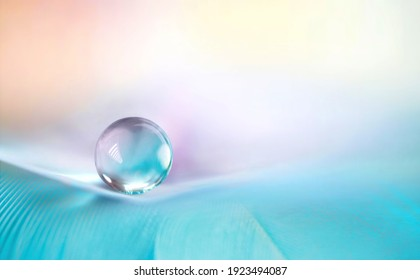 Beautiful clean transparent bright drop of water on feather in light blue and purple colors, macro. Tender image of beauty of environment and nature.