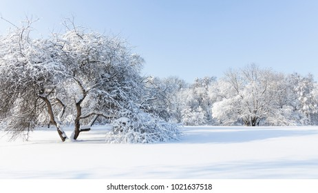 Beautiful clean white furry snow lies on the trees in winter on a sunny day in the park and blue sky