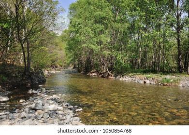 beautiful clear fiver in forest, wild forest river in spring