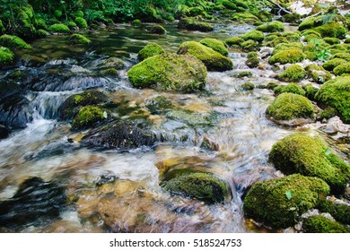 Beautiful clear stream in a green forest close to the water spring