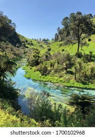 Beautiful clear water stream with visible green underwater plants and green grass and trees in the background at Blue Springs, New Zealand