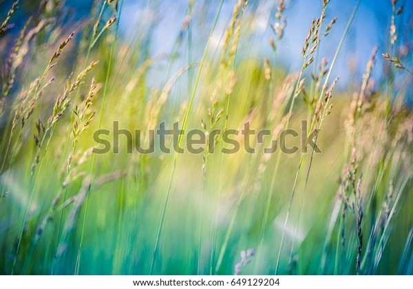 Beautiful close up ecology nature landscape with meadow. Abstract grass background.