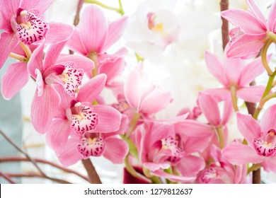 Beautiful close up fresh bouquet Cymbidium Orchids  sotft pink Lip, Tropical  sweet flowers growing in greenhouse in shining day, Wedding, anniversary,birthday and buisness import products.