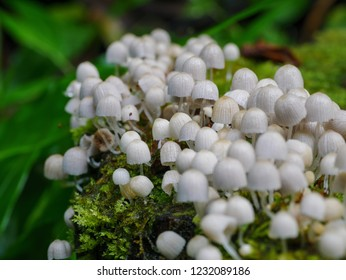 Beautiful close up group mushrooms growing on the tree stump inside the natural forest