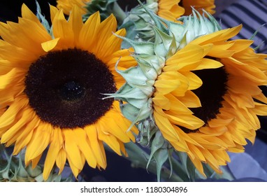 Beautiful close up photograph of big, bright, yellow, sunflowers.