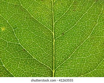 beautiful closeup autumn leaf texture background