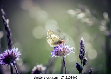 A beautiful closeup of a butterfly sitting in a flower