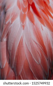 Beautiful close-up of the feathers of a pink flamingo bird. Creative background.