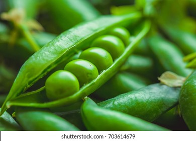 Beautiful closeup of green fresh peas and pea pods. Healthy food. Macro shooting