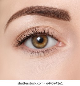 Beautiful closeup image of female brown eye with makeup. Perfect shape of eyebrow