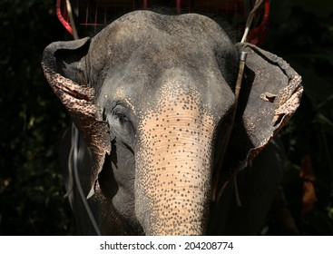 beautiful close-up portrait of an elephant in the jungle