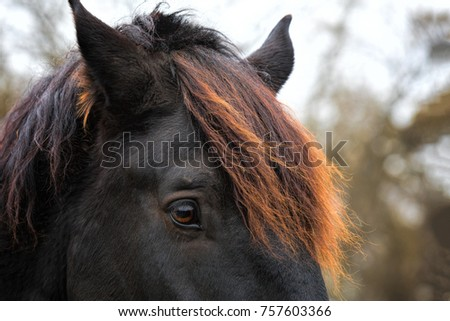 Beautiful Closeup Portrait Horse Glowing Red Stock Photo