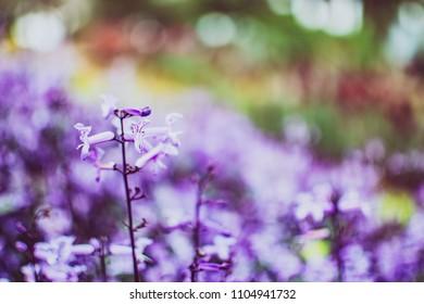 Beautiful closeup purple flower