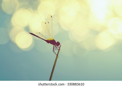 Beautiful closeup silhouette dragonfly on the grass