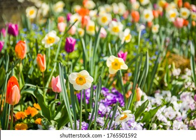 Beautiful close-up of spring garden with daffodils, tulips, lilacs and other spring flower lit by the warm spring sun