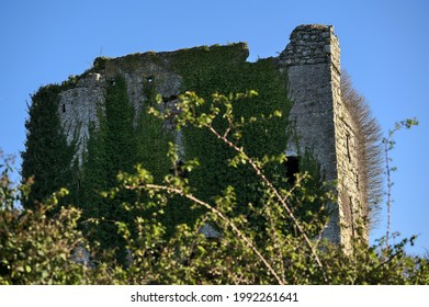 Beautiful closeup view of the mysterious Puck's Castle ruins covered with ivy (Hedera Helix) in Rathmichael, Southeastern Dublin, Ballycorus,  Dublin, Ireland. High resolution. Ireland in ruins