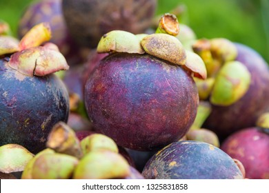 Plucked the Fruit Images, Stock Photos & Vectors   Shutterstock