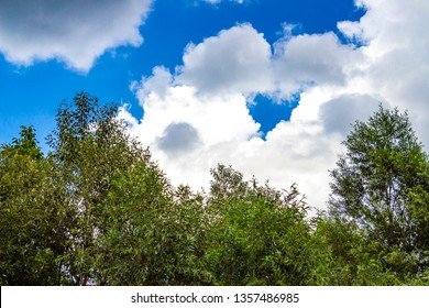 Beautiful clouds over willow treetops, summer skyscape in Debnevo, Northern Bulgaria