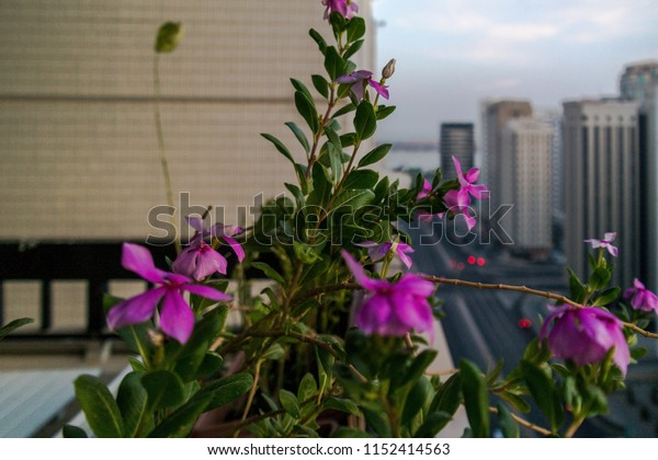 A beautiful cloudy morning sunrise in Abu Dhabi city. relaxing epic view from the balcony with beautiful flowers