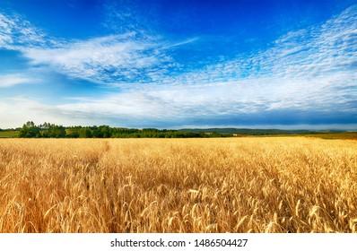 Beautiful cloudy sky over summer fields