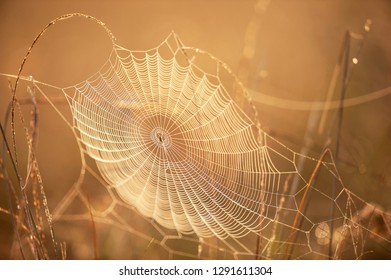 Beautiful cobweb with dew on winter morning, golden sunrise shining on cobweb and wild grass, bright transparent and glittering, blurred natural backgrounds. Selective focus.