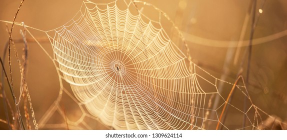 Beautiful cobweb with dew on winter morning, golden sunrise shines down on cobweb and wild grass, bright transparent and glittering, blur natural backgrounds. Selective focus.